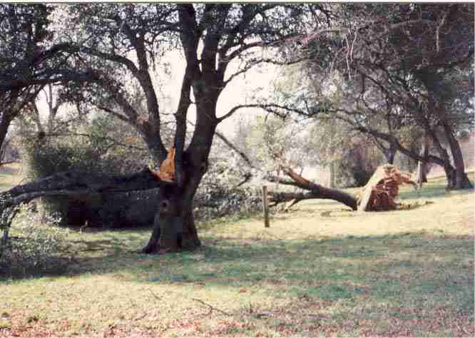 Tree Down by Vic